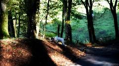 ~~ Histoire de Chemins ~~1 (Joélisa) Tags: novembre2019 chemin automne hélène chien dog ombres picmonkey