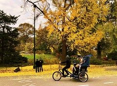 Central Park Yellow - New York City (Andreas Komodromos) Tags: andreaskomodromoa autumn bicycle centralpark citylife cityscape clearsky fall landscape leaves man manhattan midtown nature newyork newyorkcity nyandreas outdoors park people rickshaw sky skyline street streetlight trees urban woman yellow foliage scenic city
