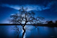 Moon magic. (darklogan1) Tags: logan darklogan1 longexposure nightphotography sonyilce7rm3 sonyalpha7r3 clouds stars water damp reflection moon trees sonyfe1635mmf28 extremadura spain blue