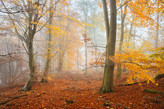 Autumn Colours (J C Mills Photography) Tags: autumn fall outdoor nautre landscape nature tree woodland forest beech leaves colour peakdistrict derbyshire
