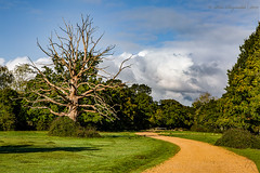 Dilapidated (Pete 5D...©...) Tags: newforest new forest tree old dilapidated driveway drive road blue sky hampshire green lush cloud clouds