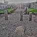 Hadrians Wall, MC 31, Mithras Temple, Brocolitia (7)
