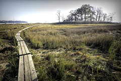 Boardwalk (JMS2) Tags: boardwalk plank trail marsh swamp island autumn pelhambaypark bronx seagrass