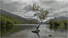 Enjoying the Lake (Charles Connor) Tags: llynpadarn northwales snowdonia mountains lakes lonetree trees landscapephotography landscape nature boats boating charlesconnor canondslr