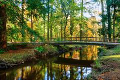 Bridge over stream at Ornamental Drive, New Forest (Art-G) Tags: landscape hdr photomatix ornamentaldrive lyndhurst newforest hampshire uk canon eos7dmkii 1018isstm sundaylights