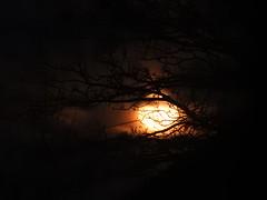EYE OF HORUS (Zen Beyond the LenZ) Tags: ap poppy poppycocqué zenbeyondthelenz sooc straightoutofcamera eyeofhorus sylvia plath rem everybodyhurts hsp highlysensitiveperson moon trees branches twigs silhouette contrast light dark orange