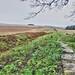Hadrians Wall, MC 34, Grindon Mile Castle (1)
