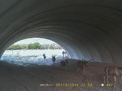 Region 5 - US 550 Colona_7.2014 A (coloradodotphoto) Tags: region5 cdot colorado dot wildlife crossing underpass fencing safety hazard protect