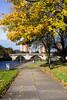 Autumn Leaves, Dumbarton Quay