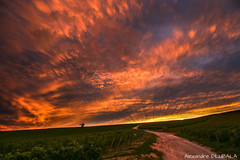 Road to heaven ? (Alexandre D_) Tags: canon eos 70d panorama colors color colorful couleur colour colours france orange outdoor outside nature sky clouds atmosphere cityscape town shadow sunset goldenhour yellow efs1018mmf4556isstm wideangle ultrawideangle countryside campagne vigne vineyard champagne marne pierry epernay reims cloud thunder thunderstorm fire artistic art fineart road couleurs wonderful exploration unescoworldheritagesite pattern gorgeous stunning landscape land earth ciel nuages paint light golden goldenlight naturallight sun storm orage rays sunray world amazing