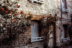 Les Roses de Veules-les-Roses (Philippe_28) Tags: veuleslesroses caux 76 seinemaritime france europe normandie normandy argentique analogue camera photographie film 135