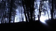Mystical forest (v o y a g e u r) Tags: myst mystical fog forest wood tree light shadow dark noir night morning ray bosco bois foret mystery arbres arboles nature black france