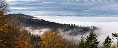 Mist in the Black Forest, Germany Panorama (Malte Ketelsen) Tags: mist blackforest germany autumn orange trees forest above clouds a7riii a7r3 sony alpha panorama landscape schwarzwald