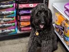 Benni goes shopping (Bennilover) Tags: benni dog dogs nick petsupplywarehouse kibble dogfood fromms salmon treats salmonalaveg
