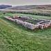Hadrians Wall, MC 31, Mithras Temple, Brocolitia (13)