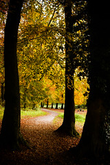 South Downs Autumnal Pathway (broadswordcallingdannyboy) Tags: leaves nationalpark autumn fall mood light hampshire gardens leonreillyphotography copyright donotcopy eos7d canon leonreilly eflens colour autumncolour britishnationalpark southdowns qecp beautifullight path pathway
