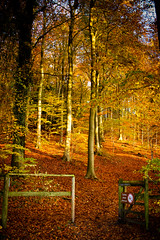 Autumn is just through this gate (broadswordcallingdannyboy) Tags: leaves nationalpark autumn fall mood light hampshire gardens leonreillyphotography copyright donotcopy eos7d canon leonreilly eflens colour autumncolour britishnationalpark southdowns qecp beautifullight