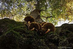 From Root To Sky (Crofter's) Tags: fungi mushroom mushrooms autumn autumncolors autumn2019 leaves moss forestmoss forest walkingthroughtheforest trees tree sony sonyalpha sonya sony77ii sonyalpha77ii sonya77ii sigma sigma18300 sigma18300mm november novemberain november2019 november2k19 wildlands wildlandspictures