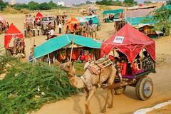 Camel caravan at the Pushkar Camel Fair,, Pushkar Rajasthan India (JJ Doro - Bangkok) Tags: horsetrading pushkarlake desert camel cameltrading rajasthan mela religious turbans india fairgrounds camels saricoloreedsari camelfair pushkar robes hindutemple hindu