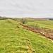 Hadrians Wall, MC 34, Grindon Mile Castle (4)