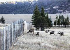 Region 5 - US 550 Colona_Deer Fence 072 (coloradodotphoto) Tags: region5 cdot colorado dot wildlife crossing underpass fencing safety hazard protect