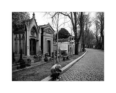 Cimetière du Père Lachaise (Franco & Lia) Tags: street photographiederue fotografiadistrada strasenfotografie paris parigi cimitero cimetière pèrelachaise francia france biancoenero noiretblanc blackwhite schwarzundweiss