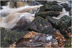 Autumn at Burbage Brook (Tom Coulson) Tags: water autumn colours rain torrent