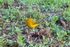 Bird (deepskywim) Tags: dieren vogels sanignacio misionesprovince argentina