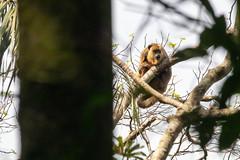Monkey (deepskywim) Tags: apen zoogdieren dieren sanignacio itapúa paraguay