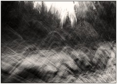ArgusC3-Kentmere400-PorterMC-12-p-099 (device9) Tags: abstract add tags bw analogue analog monochrome blackandwhite shadow contrast landscape argusc3 kentmere forest folliage