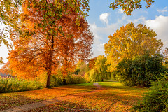 Autumn in the park (JnHkstr) Tags: 2019 autumn herfst estersveldpark gravenetherlands grave d500 nikon colors