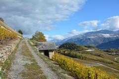 Vignes (corinne emery) Tags: chateaudelasoie vignes vines vin nature landscape exterieur valais wallis suisse jaune cloud ciel