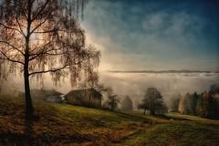 Above the fog (ramerk_de) Tags: bavarianforest bayerischerwald fog sun autumn autumncolors foliage