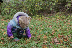 (Theresa Best) Tags: autumn portrait fall wisconsin canon child washingtonisland theresabest canont6s canon760d canon8000d explorecreatewonder childhood kid
