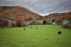 Buttermere (Nige H (Thanks for 25m views)) Tags: nature landscape lakedistrict buttermere sheep farm fells cumbria england autumn fall