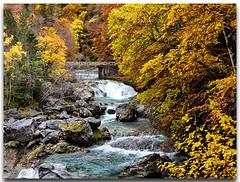 Parque Nacional de Ordesa y Monte Perdido. (Carpinet.) Tags: otoño paisaje landscape autumn rio river ordesa parquenacional forest bosque woodland olympus esolympus nature naturaleza puente