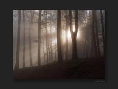 Beloved LIGHT ((Oden) WALD-Fotograf) Tags: wald sunbeam forest herbst hessen odenwald bergstrasse