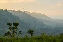Vale do Rio Buranhém (Marcelino Dias) Tags: vale valley rio buranhem porto seguro manhã amanhecer morning misty névoa