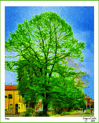 L'albero di Pisa - The tree of Pisa (Eugenio GV Costa) Tags: approvato digital painting graphic art arte digitale
