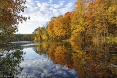 Reflective Color (Singing Like Cicadas) Tags: 2019 autumn ohio october mogadorereservoir mogadore portagecounty outdoors nature color onethousandgifts trees