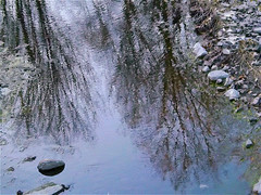Silver Creek Freezing (scilit) Tags: creek winter reflections water cold freezing rocks trees branches pebbles snow mirror scenery landscape waterscape ripples roots plants coth coth5 shockofthenew awardtree