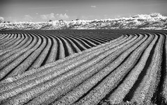 Cultivations (David Feuerhelm) Tags: mono monochrome bw blackandwhite noiretblanc schwarzundweiss landscape field cultivated soil patterns lines potato infrared ir contrast agriculture farming lincolnshire nikkor 18200mmf3556 nikon d90