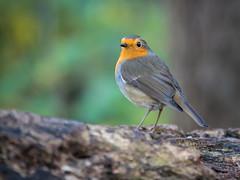 Robin (holgerreinert) Tags: leica november nature 2019 vario naturelove elmarit monrepos varioelmarit 50200 gx80 hes50200 topaz