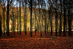 Autumn colours around Powerscourt Waterfall (Kevin_Barrett_) Tags: ireland wicklow powerscourt trees autumn fall landscape leaves scenic scenery serene backlit colours dramatic