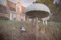 Gnome Home (Patti Deters) Tags: gnome mushroom toadstool lawn grass house fairy elf day grow lookingup chair brown green fungus cap umbrellamushroom outdoors ground nature magic toxic dwarf laughinggnome midget dreamy dwarfs laughingdwarf laughing hat enchanted beard mystic mushrooms dream fairytale fantasy magical fungi whimsical fun gnomehome