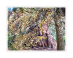 Autumn (Leon.vanKemenade) Tags: lensbaby velvet56 sheffieldpark nationaltrust