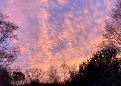 Be sure to check out tonight's #sunset while you can! (nomad7674) Tags: sunset 2019 20191112 november autumn fall dusk twilight sky clouds ctweather ctwx ct connecticut weather atmosphere beauty newengland sheltonct shelton