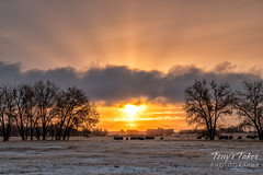 November 11, 2019 - A beautiful sunrise at the Rocky Mountain Arsenal. (Tony's Takes)