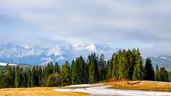 Trees Mountains & Mist (kckelleher11) Tags: 1240mm 2019 hdr march olympus poland em1 mzuiko pine trees trip