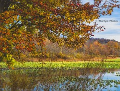 Autumn in New York - Rockland Lake 010 (moelynphotos) Tags: newyorkstate rocklandcounty rocklandlake autumn autumnleafcolor lake midatlanticusa nature landscapescenery reflection outdoors northeast seasons tree vibrantcolor moelynphotos